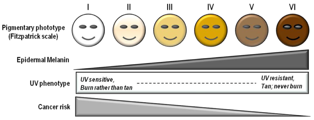 A scale to show different skin types and their attributes.